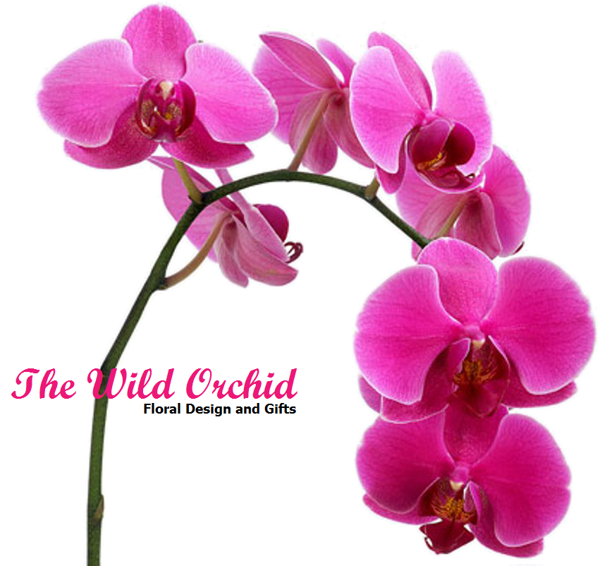 Wild Orchid logo